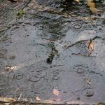 Rain drops in puddle