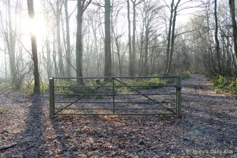 lone gate in morning sunlight and frost