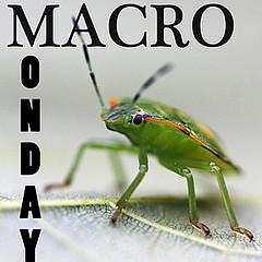 Badge for Macro Monday