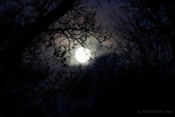 moon through trees