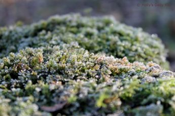 Close up shot of frost covered moss