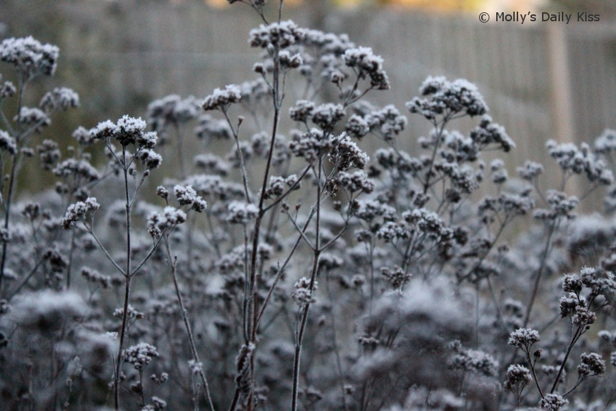 Silver grey Frost