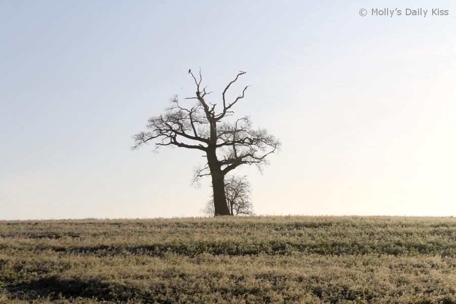 lone winter tree on the horizon