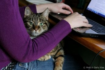 Writer with cat on her lap
