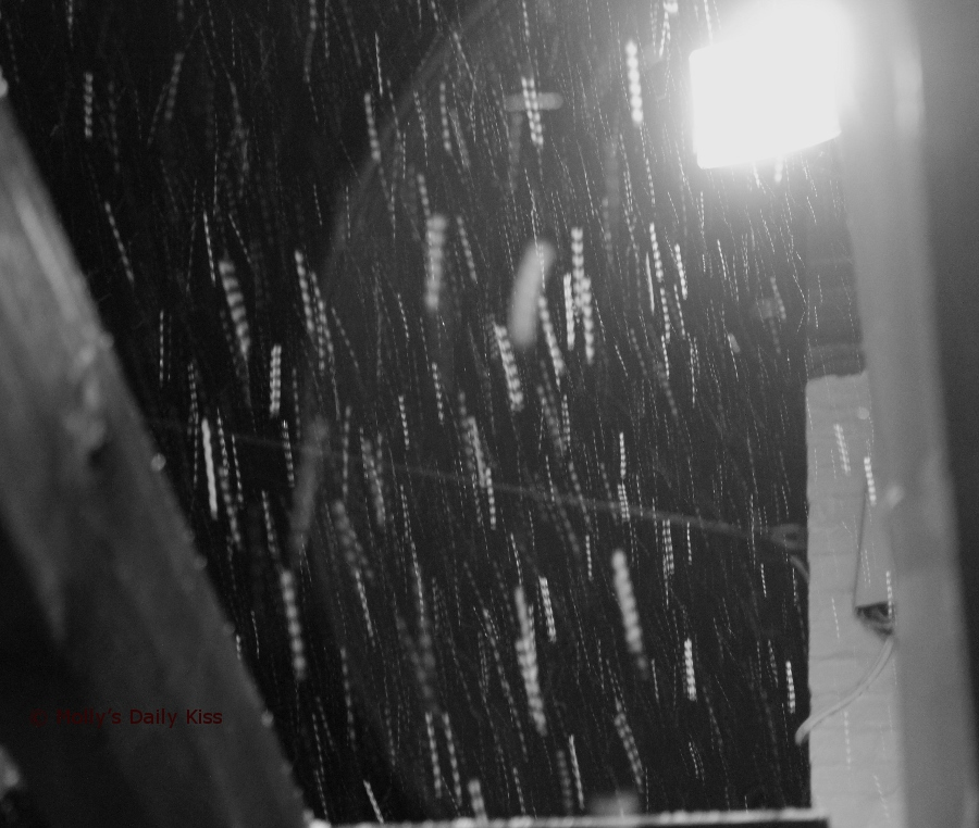 snow falling through the light