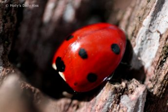 super macro shot of ladybug