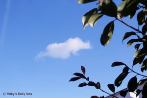 little cloud in deep blue sky