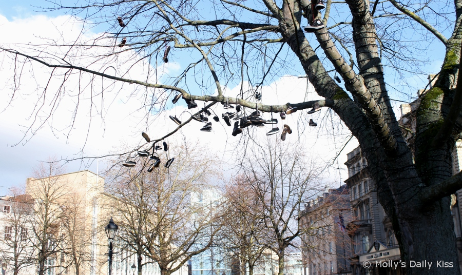 shoes hanging in tree in Bristol