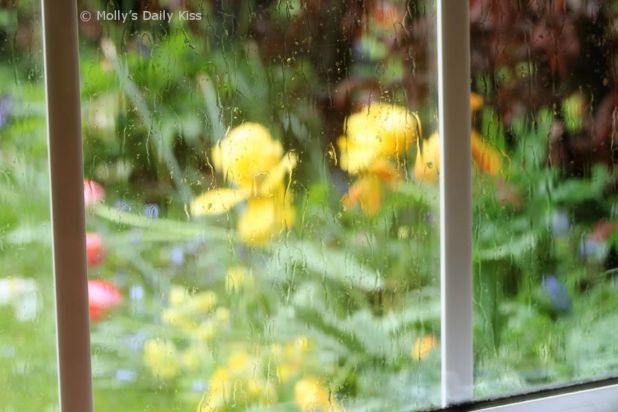 spring flowers through the rain