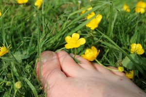 barefeet toes in the grass