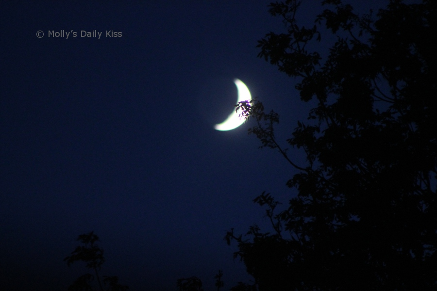 Cresent Moon through the trees