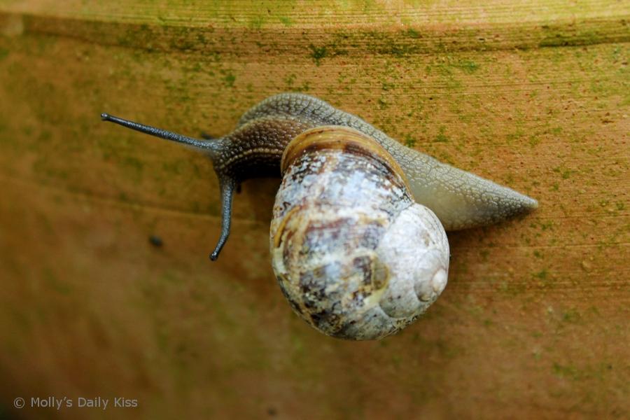 Macro shot of a snail