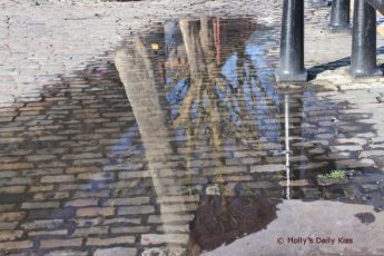 Trees reflected in a puddle on cobble street