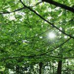 glint of sunlight through the trees