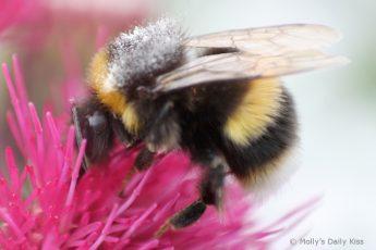 Super macro shot of a bee