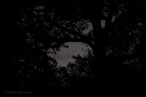Night through tree