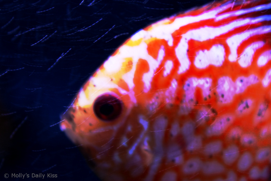 Macro shot of tropical fish