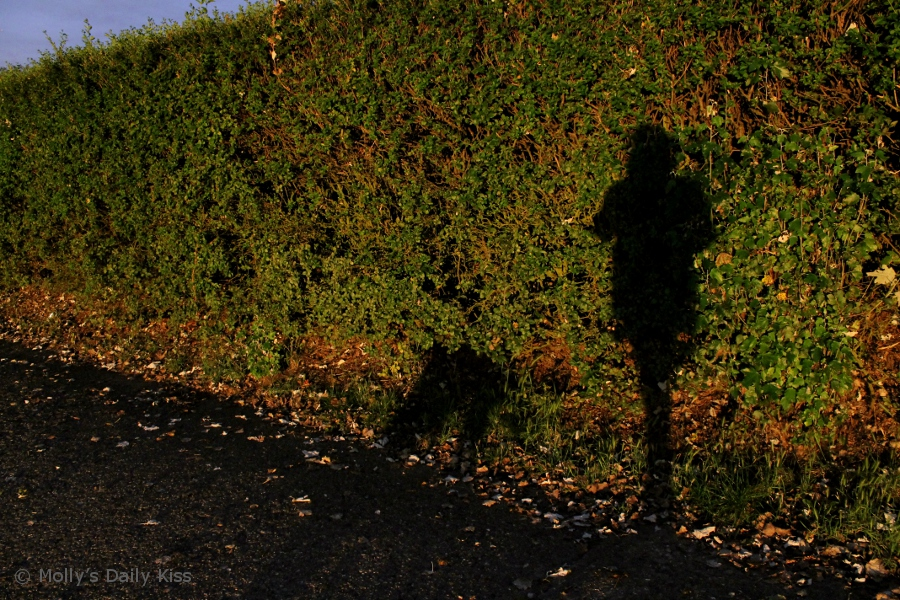 Shadow image of woman walking the dog