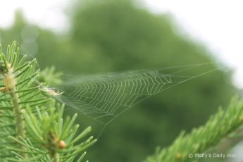 Green spider in his web