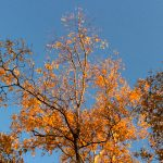 Autumn leaves in the sunlight