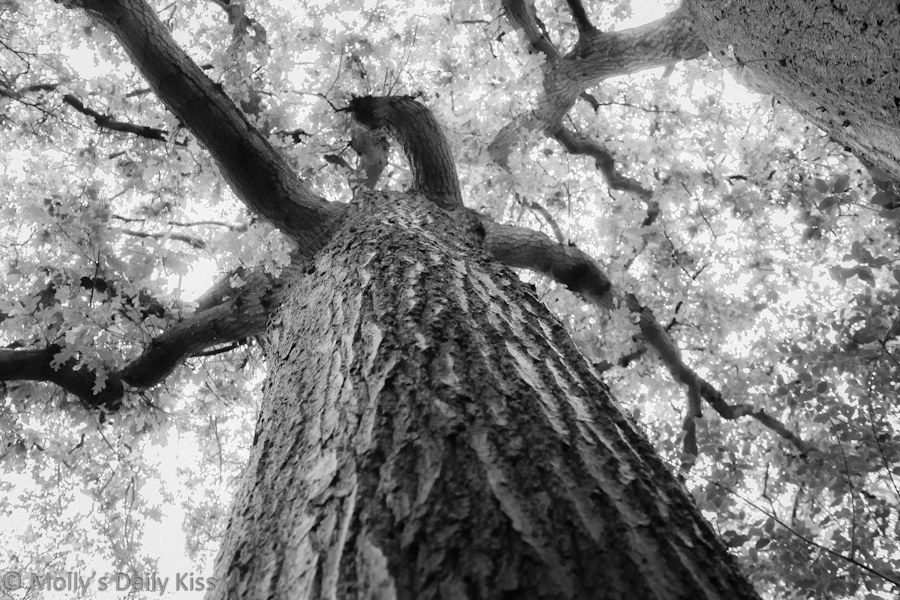 monochrome photography of a tree trunk