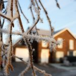 Frosted branches in front of house
