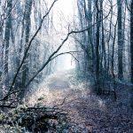 Frosty winter woods