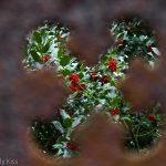 Holly bush through a tombstone
