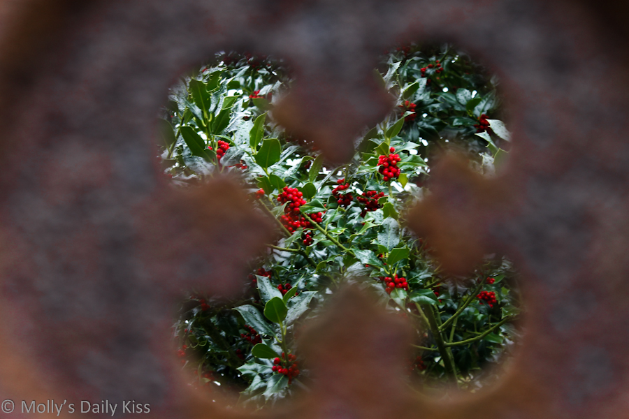 Holly bush through a tombstone