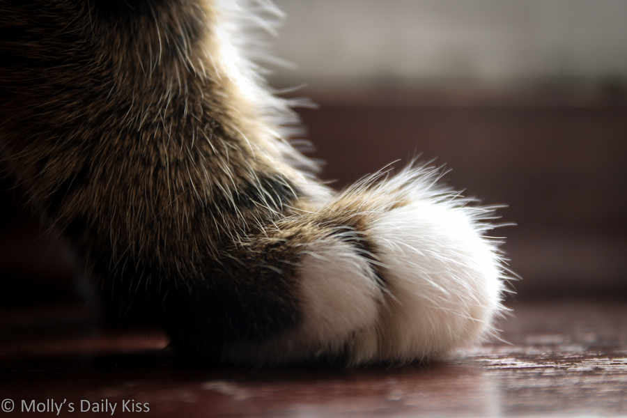 Macro shot of a cat paw