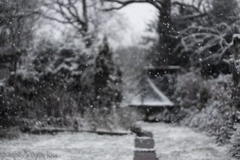 Snow flakes in the air
