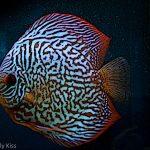 Tropical fish art work photography