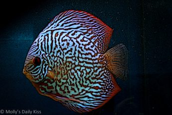 Tropical fish art work photography