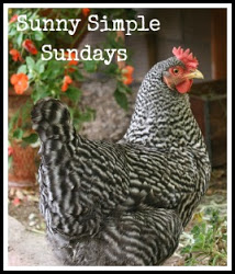 Sunny Simple Sunday's badge