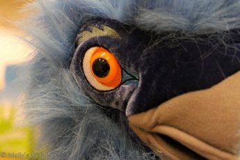 Macro Shot of Emu eye