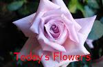 Todays flowers blog badge