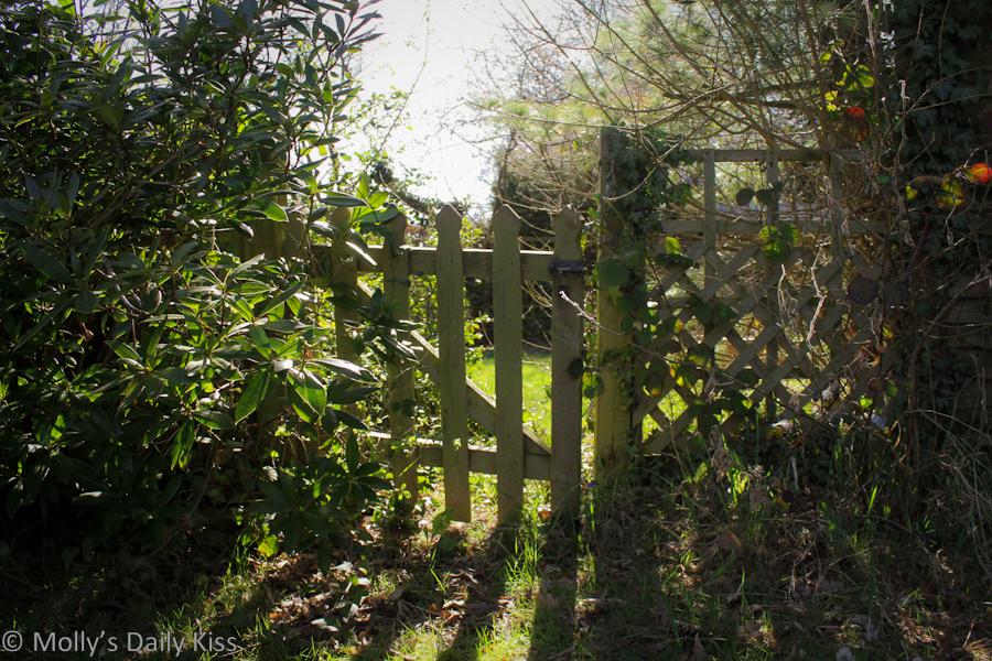 Little garden gate
