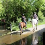 Horse riders in the road