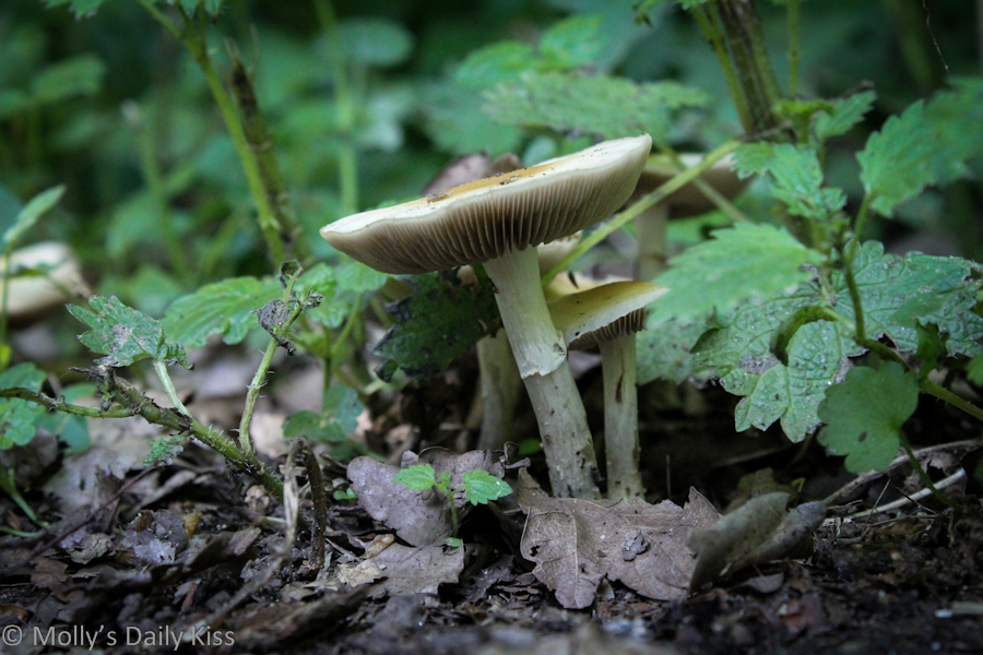 Toadstool in the woods
