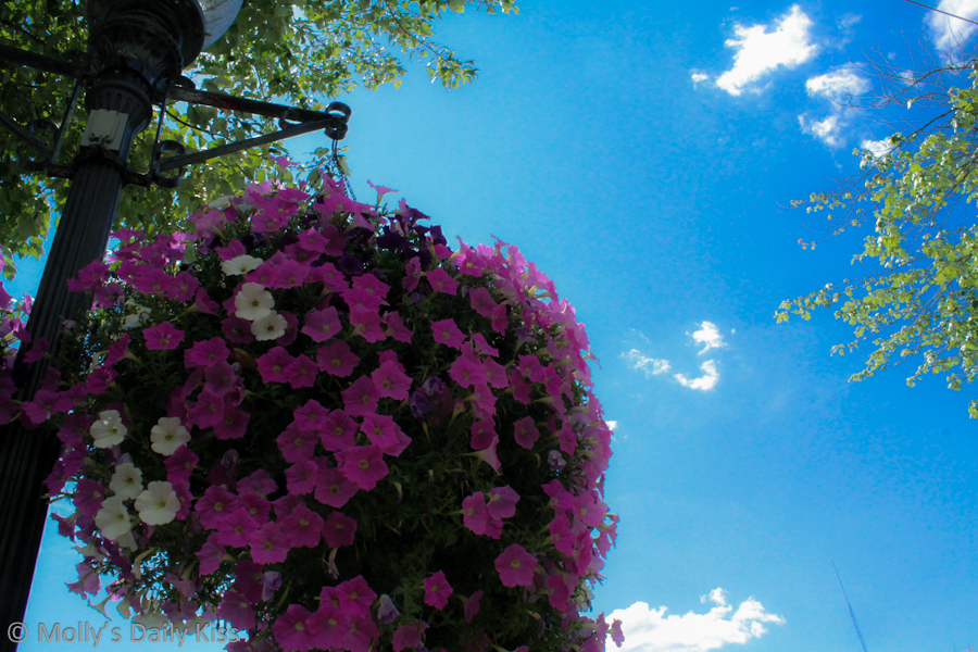 Blue sky over street flowers in Pottstown