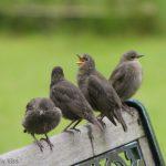 Birds singing open beak