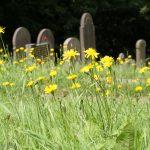 Garveyard with wild flowers