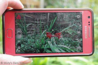 Photograph of my camera phone
