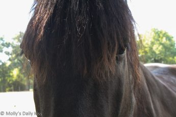 Close up of horse face and eyes