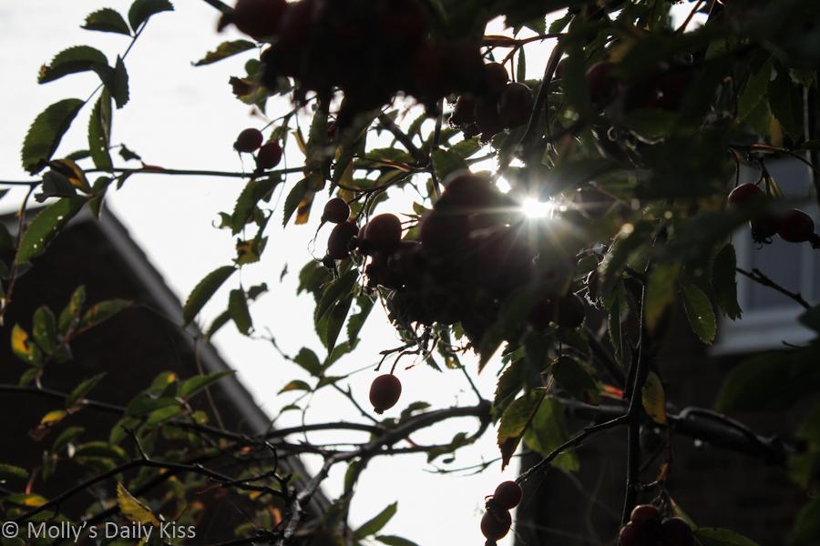 Sunlight burst through trees