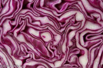 Macro shot of red cabbage