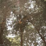 Spiders web with sunshine
