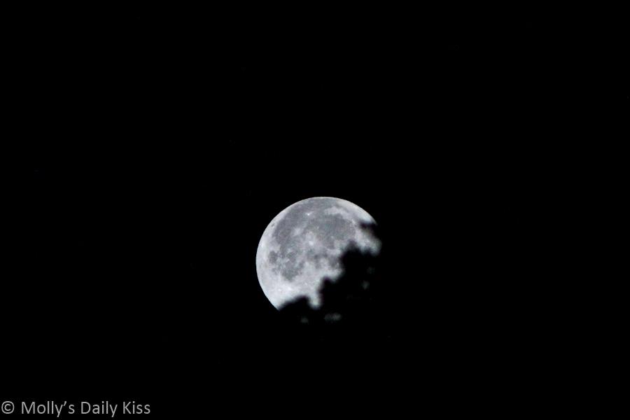 Moon setting behind trees