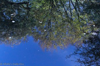 Puddle reflection of blue sky and trees