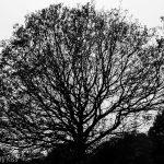 Bare bones of winter tree
